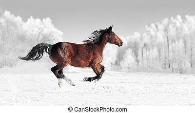 preto branco, fotografia, com, cor, cavalo