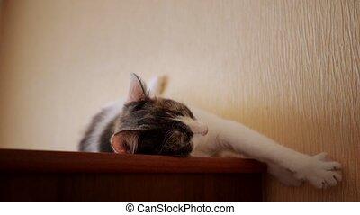 Pretty cat lying on the closet.