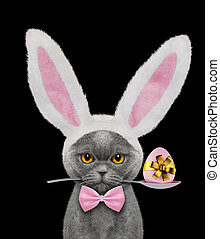 Pretty cat with rabbit ears and easter egg. Isolated on black