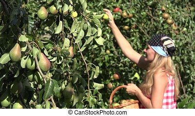 Pretty country woman girl picking pear fruits from the pear tree to wicker basket. Focus change. 4K