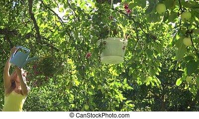 Pretty gardener woman with watering-can water flower pots hang on fruit tree in summer garden. 4K