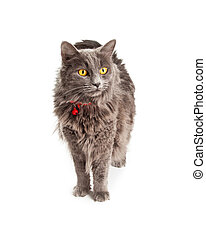 Pretty Gray Cat With Yellow Eyes and Red Collar