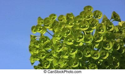 Pretty Green Flower Buds In Spring
