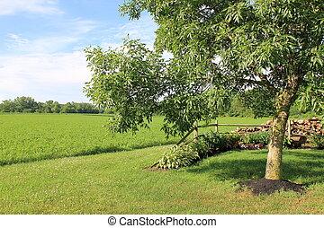 Pretty green lawn and leafy tree