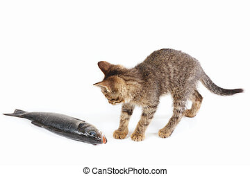 Pretty kitten looks at a sea bass fish on white background -...