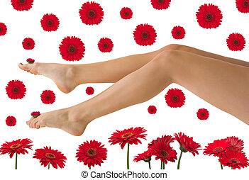 Pretty Legs - Pretty legs with red daisy gerberas