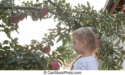 Pretty little girl picks a big red Apple from a tree, on a beautiful sky background at sunset.
