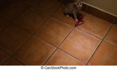pretty little gray kitten played on the floor