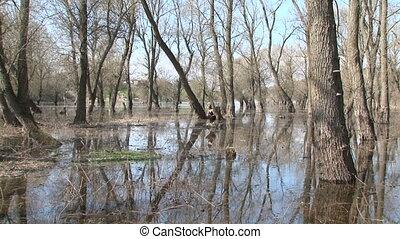 Pretty Model Posing At Stump In Park In Flood. Zoom in. -...