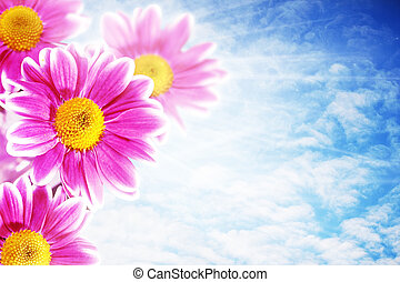 Pretty pink flowers against blue skies, abstract natural backgrounds