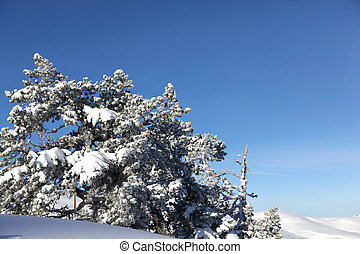 Pretty snow covered trees