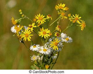 pretty summer flowers in a meadow