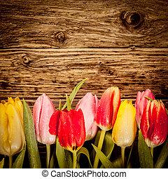 Pretty tulip border on vintage wood - Pretty tulip border in...