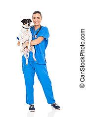 vet doctor holding pet dog - pretty vet doctor holding pet...