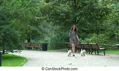 woman have a walk with two little white doggies in park. Static shot