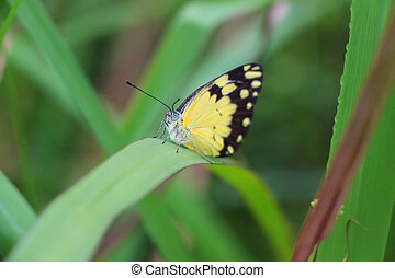 Pretty Yellow Butterfly on a Green Leaf