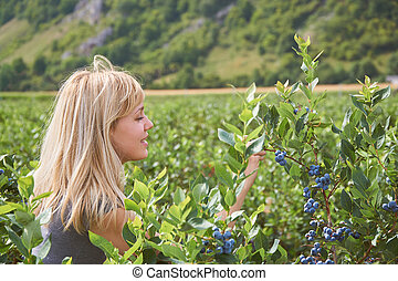 Pretty young woman is picking fruits on a blueberry field....