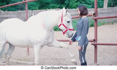 Pretty young woman strokes a graceful white stallion, close...