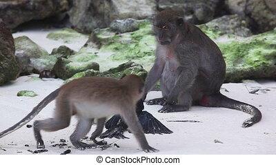 Prey  - Wildlife monkey hitting black bird