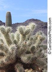 Prickly Cactus in Arizona Desert