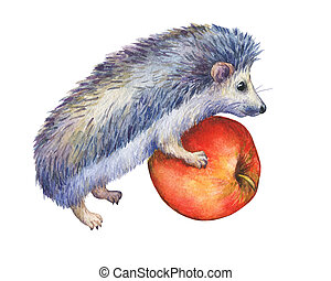 Prickly hedgehog holds red apple in paws. Hand painted...