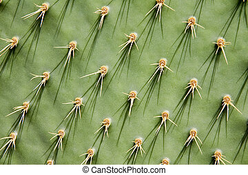 Prickly pear cactus - Close-up of a prickly pear cactus ( ...