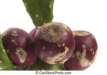 Prickly pear cactus ( Opuntia ficus-indica ) with red fruits