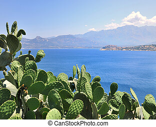 prickly pear on sea background