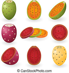 Prickly pear - Vector illustration of prickly pear fruit...