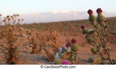 Prickly plant 10