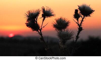 Prickly plant 7