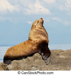 Pride and the Sea Lion