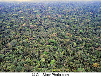 Primary rainforest in the Amazon - Primary rainforest in the...