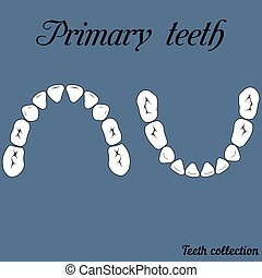 Primary teeth Chewing surface