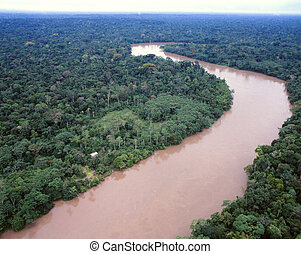 Primary tropical rainforest beside the rio Aguarico, Ecuador...