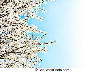 primavera, árbol