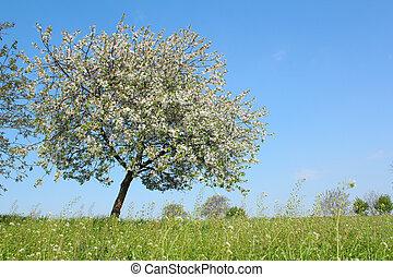 primavera, árbol, pradera