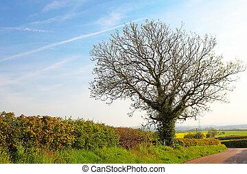 primavera, árvore, ligado, campo verde