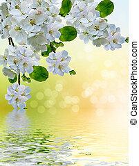primavera, árvore., maçã, paisagem, florescer