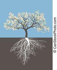 primavera, árvore, maçã, raizes