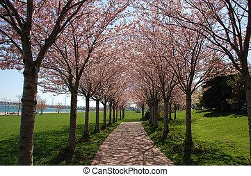 primavera, árvores