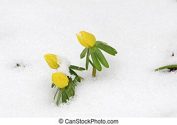 primavera, último, neve