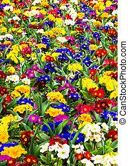 primavera, abstratos, flor, fundo