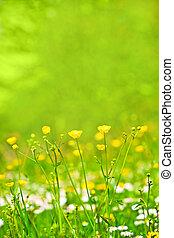 primavera, abstratos, flores, capim, fundo