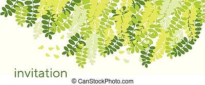 primavera, acacia, flor, tarjeta, template.