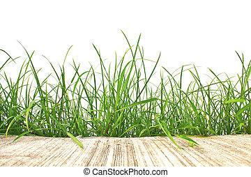primavera, aislado, cemento, fondo., verde, fresco, blanco, pasto o césped, camino