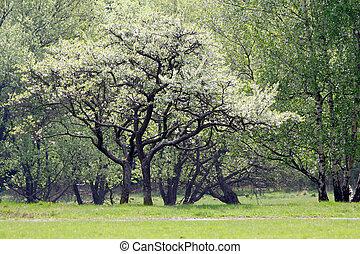 primavera, albero, tempo