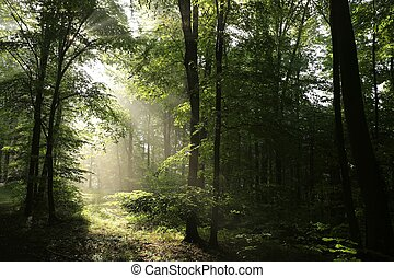 primavera, alvorada, floresta