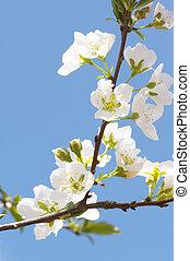 primavera, aria
