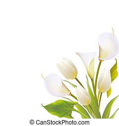 primavera, backround, flores, lettering., texto
